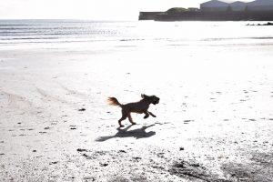 Happy dogs on Par Beach