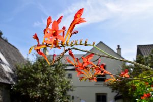 The Gables exotic flowers