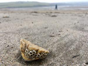 Par sands, shells